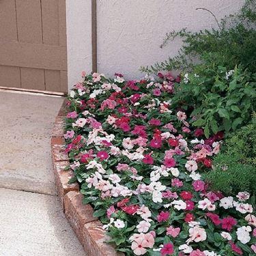 tappeto fiori pervinca