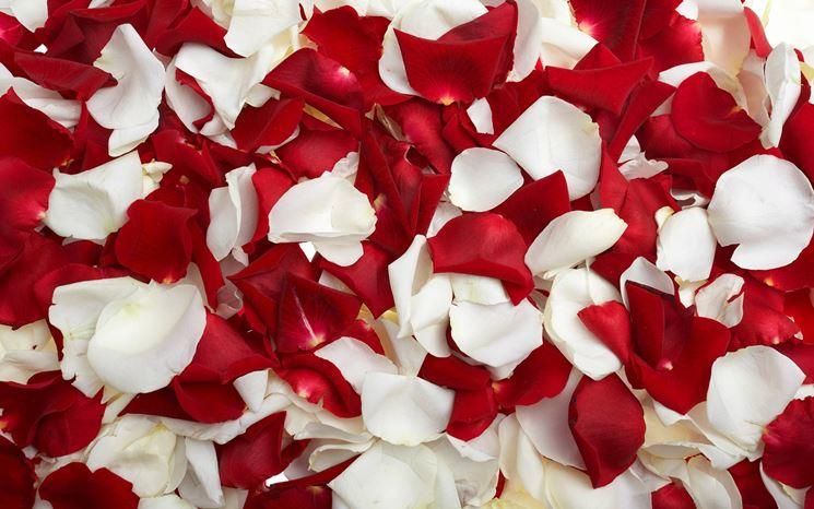 composizione petali di rosa