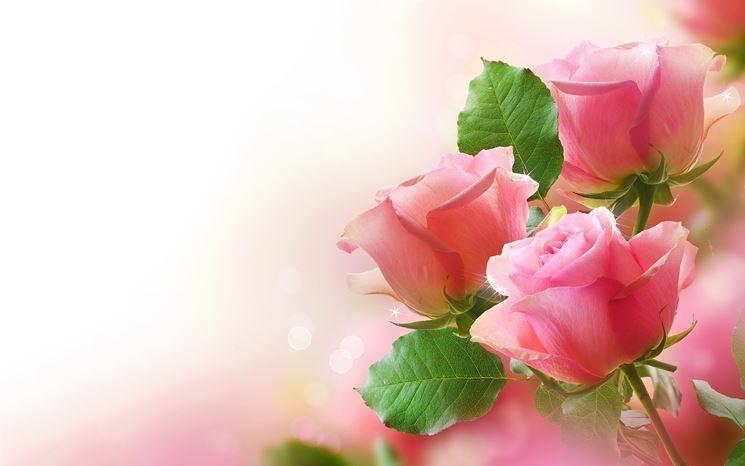 mazzo di rose rosa