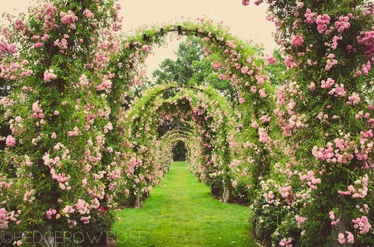 Un elegantissimo corridoio di rose.