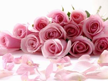 una composizione di dodici rose rosa