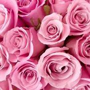 colore rosa significato
