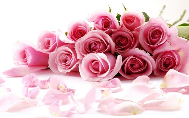 una rosa color rosa