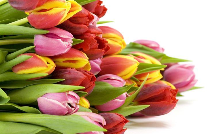 Fascio di tulipani colorati
