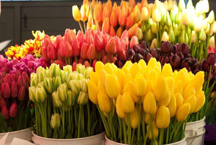 Vasi di tulipani colorati