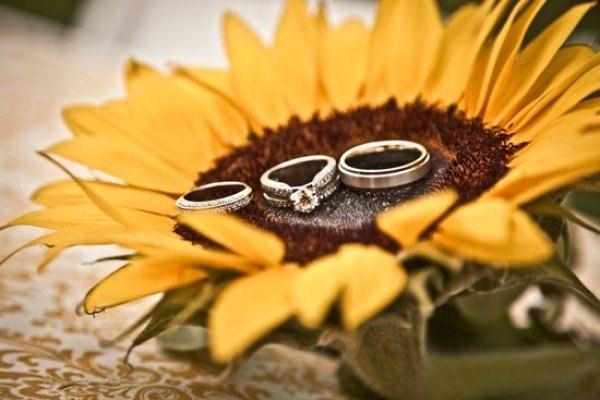 Girasole Matrimonio Significato : Significato fiori girasole