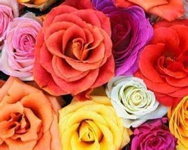 Rose di vario colore