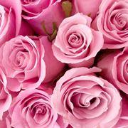 rosa significato