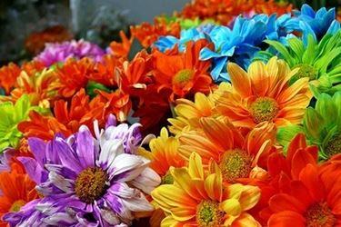 I colori diversi di uno stesso fiore