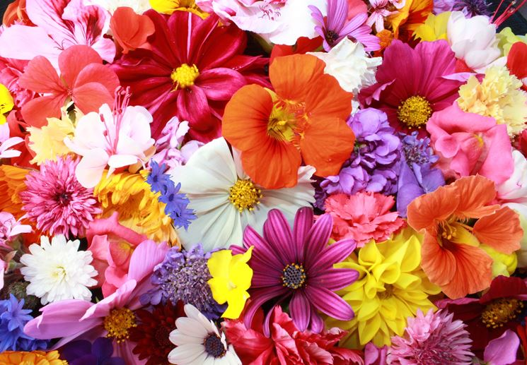 Diversi tipi di fiori