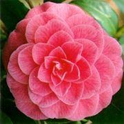 simbologia fiori