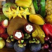 frutti esotici coltivabili in italia