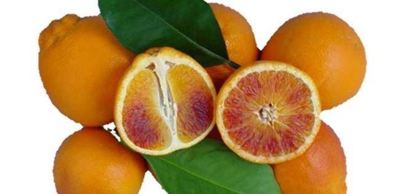 <h6>Albero arancio</h6>Non sono fa bene alla salute ma l�arancio � anche un frutto succoso e buono da mangiare. Scopri variet� e propriet� di questo agrume!