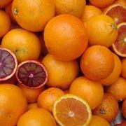 pianta di arancio