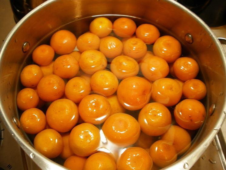 Cucina kumquat