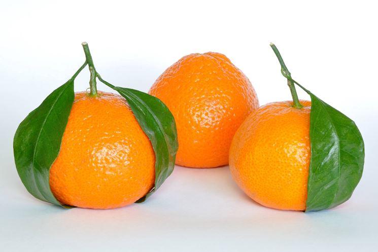 Un'immagine di tre mandarini