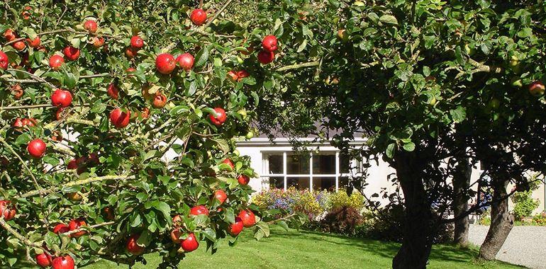 <h6>Albero di melo</h6>Vuoi cogliere una mela succosa comodamente nel giardino della tua casa? Scopri con noi i segreti per la coltivazione di questa pianta