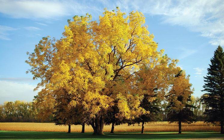 Albero di noci in autunno