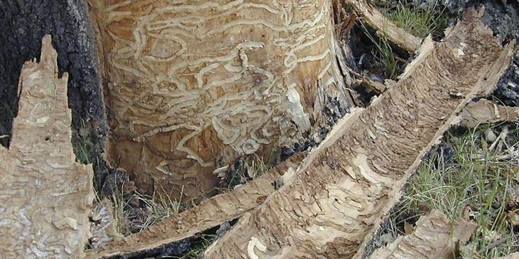 Albero castagno funghi