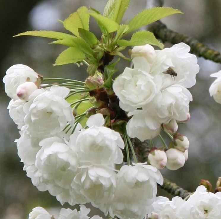 Particolare della fioritura