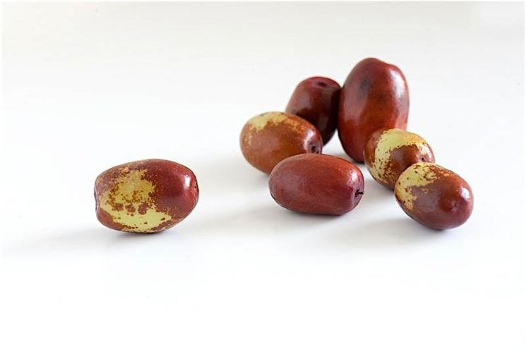 Il frutto: le giuggiole