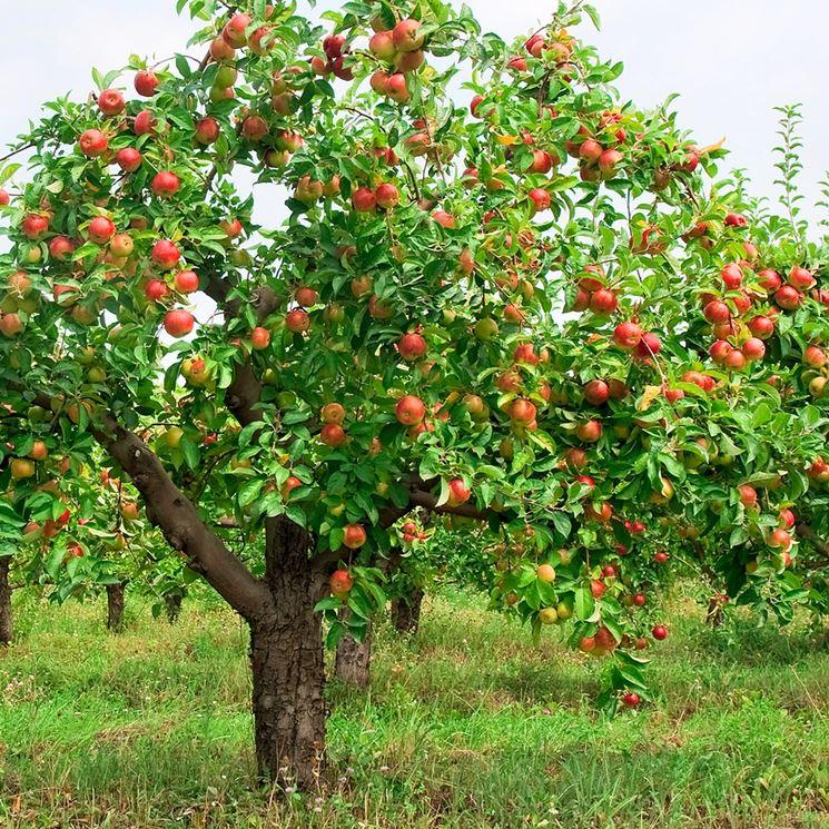 Melo frutti