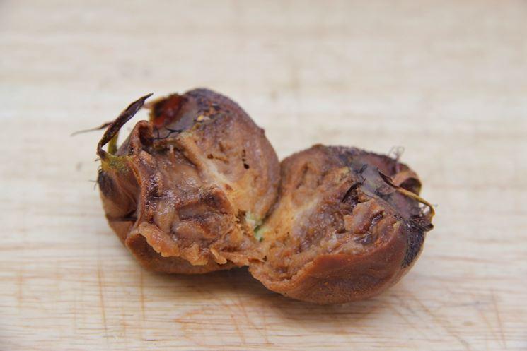 Infestazione pianta frutto