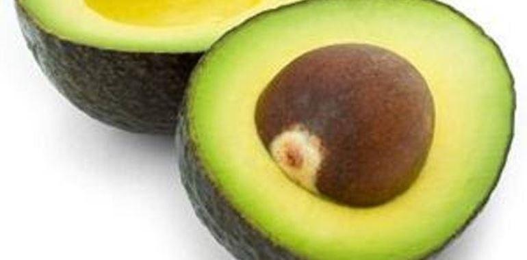 <h6>Pianta di avocado</h6>In questa piccola guida preziosi suggerimenti sulla coltivazione e sull'utilizzo della pianta di Avocado.