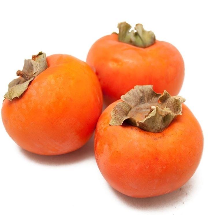 Frutti pianta cachi