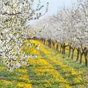 calendario trattamenti piante da frutto