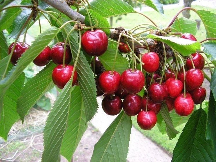 Pianta con i frutti