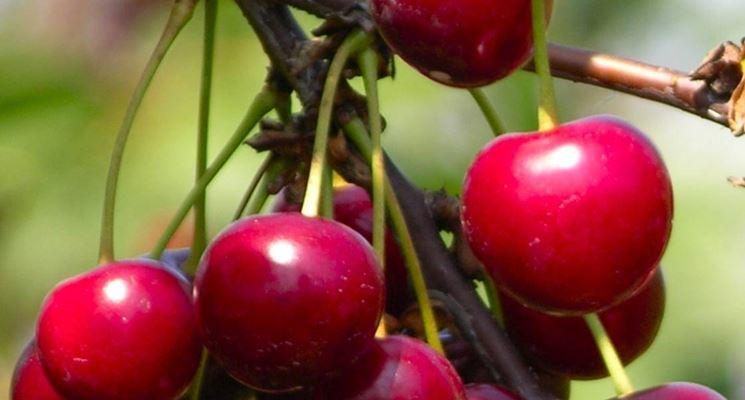 Le ciliegie Ferrovia: le più consumate in Italia