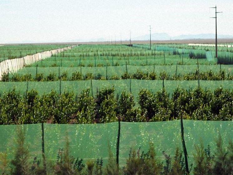 sito per la coltivazione degli agrumi