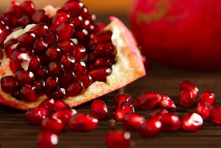 Fiore e frutto del melograno