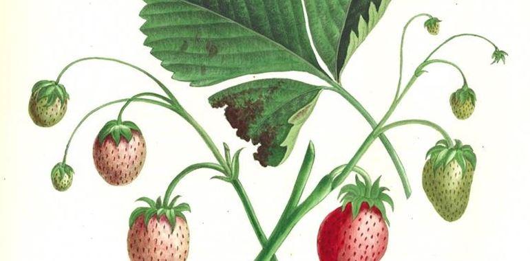 <h6>Come coltivare le fragole</h6>Impara a coltivare le fragole con i nostri suggerimenti. Non solo belle da vedere ma anche buona da gustare!