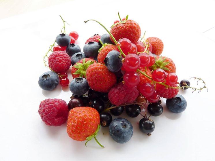 Facile coltivazione dei frutti di bosco