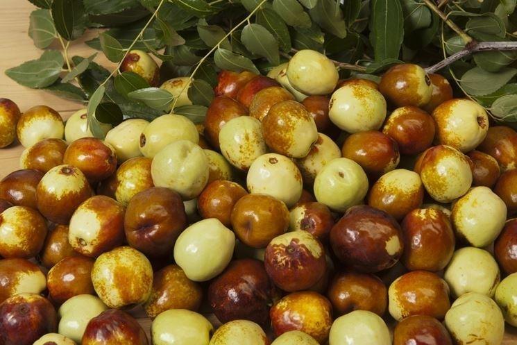 Giuggiole frutti