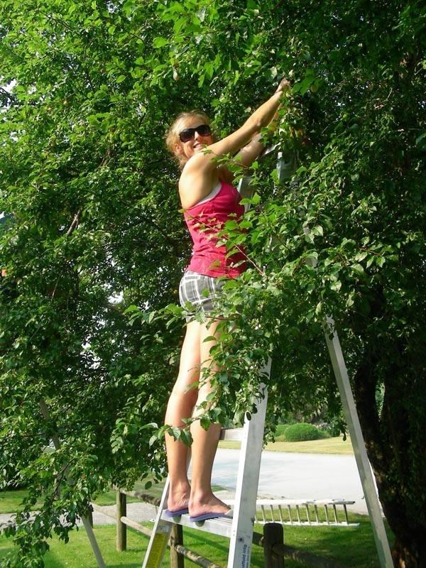Potatura alberi da frutto frutti minori potatura for Quando piantare alberi da frutto