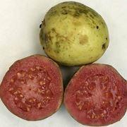 Frutti tropicali dalla a alla z for Feijoa frutto prezzo