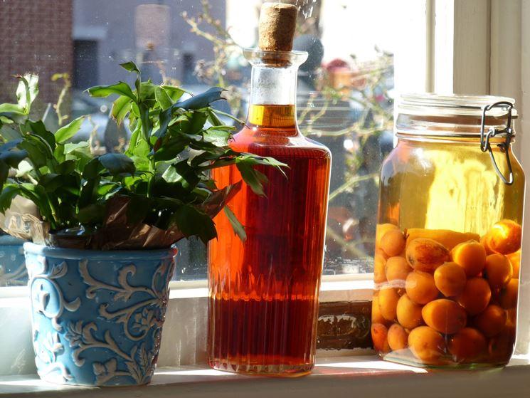 Distillato di noccioli: Nespolino