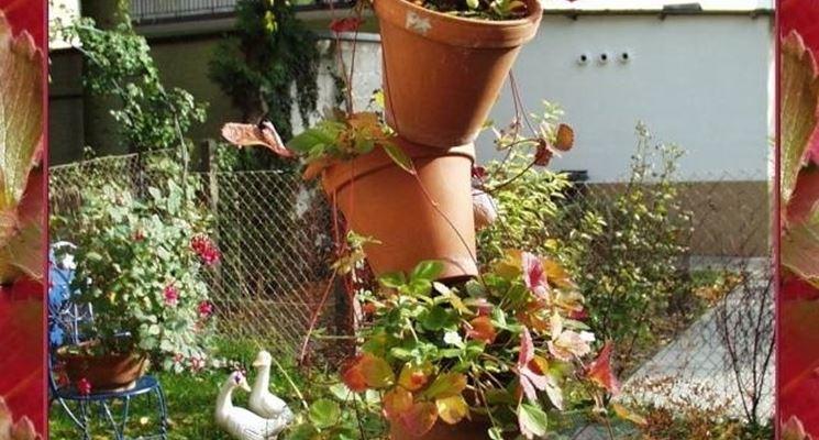 Un simpatico modo di allevare fragole in vaso