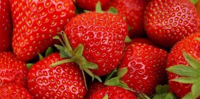 <h6>Pianta fragola</h6>Vuoi conoscere questa pianta dai frutti succosi e deliziosi? In questo articolo consigli e approfondimenti sulla fragola