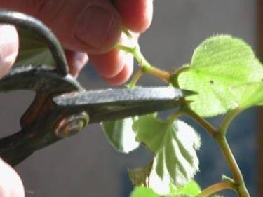 forbici giardinaggio