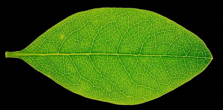 <h6>Forma delle foglie</h6>Ad ogni specie di albero la sua foglia! Impara a conoscere le caratteristiche di ciascuna con la nostra guida!