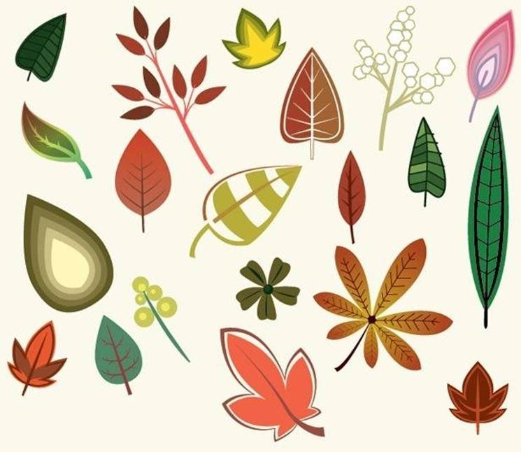 tipi di foglie