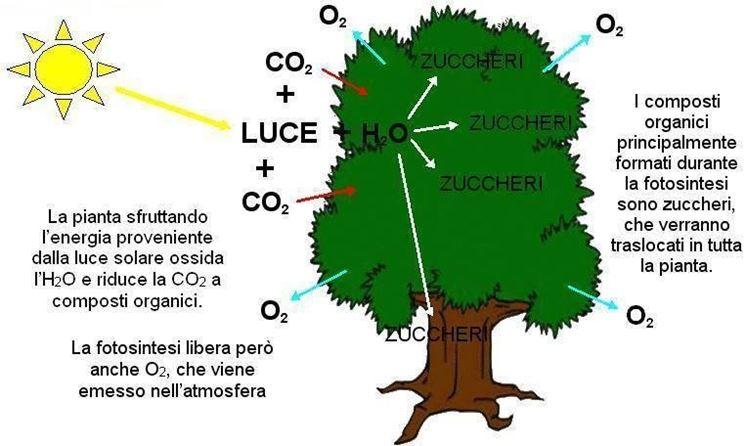 Formula generale della fotosintesi clorofilliana