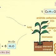 Formula della fotosintesi clorofiliana