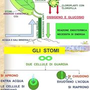 formula fotosintesi