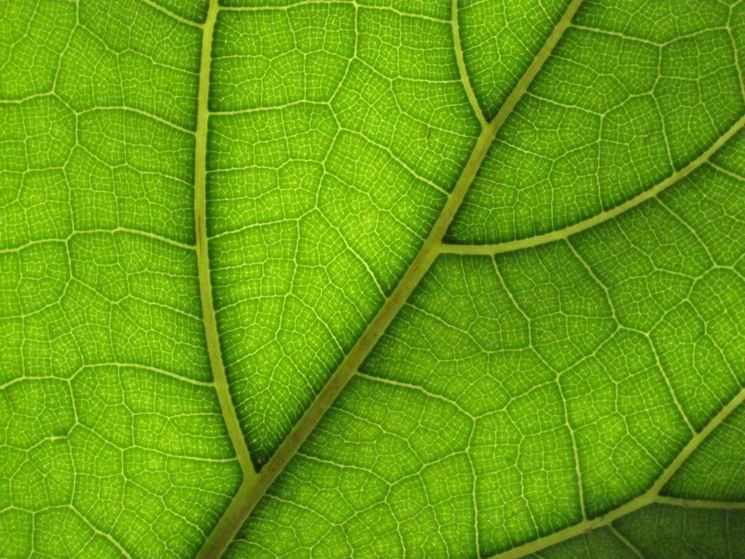 Altre forme di fotosintesi