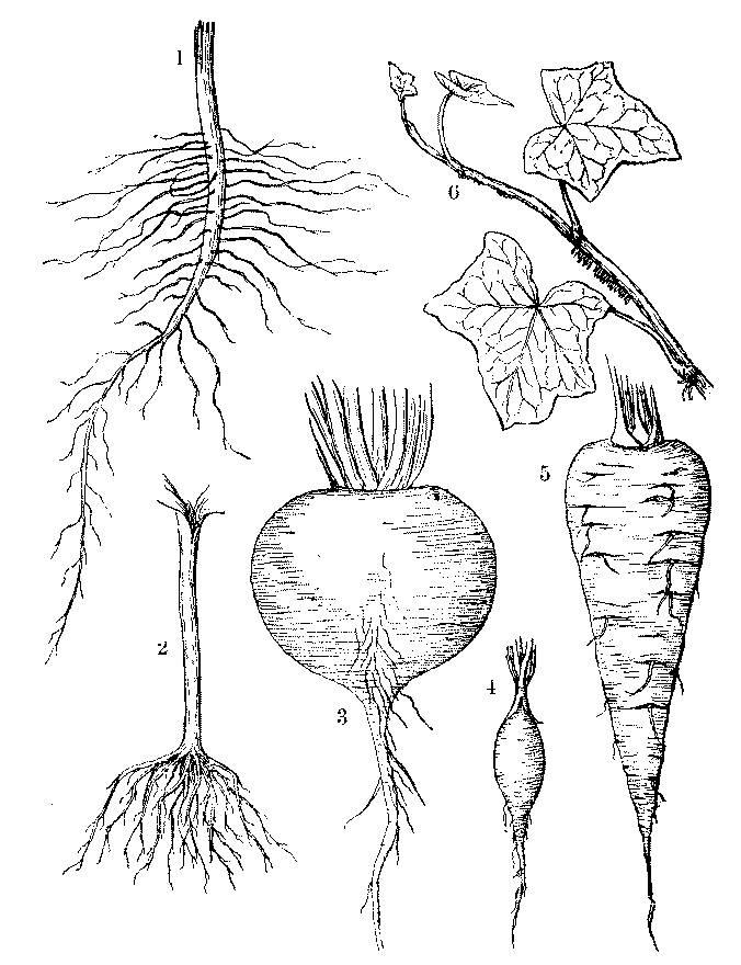 le parti di una pianta - lessons